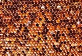 Что такое пчелиная перга
