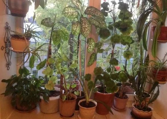 Как правильно купить комнатное растение?
