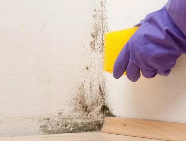 Как избавить дом от плесени?