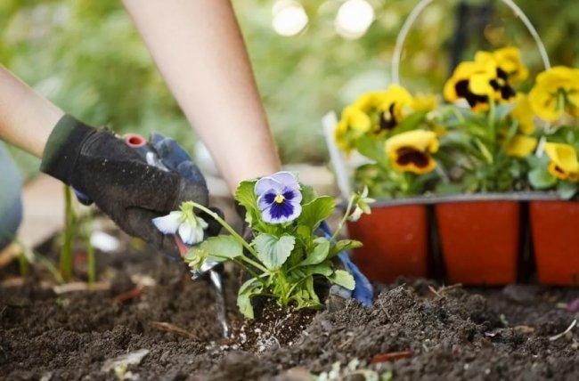Цветы, которые рекомендуется садить на даче