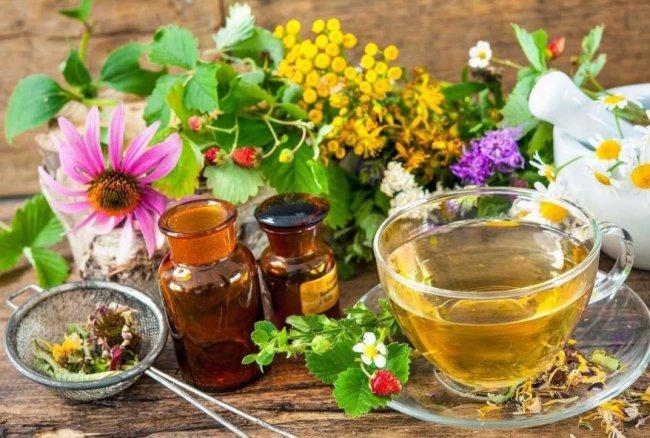 Лекарственные травы, чаи и настойки - стоит ли попробовать?