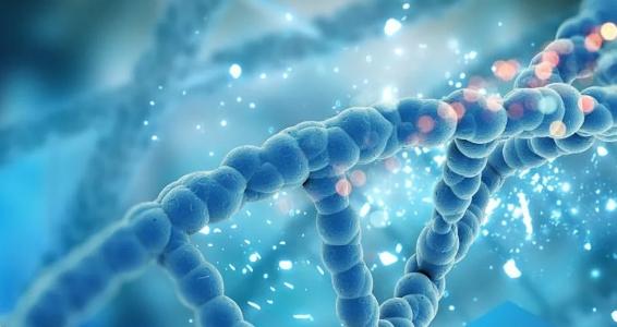 Что нужно знать про полинуклеотиды нутрицевтиков?